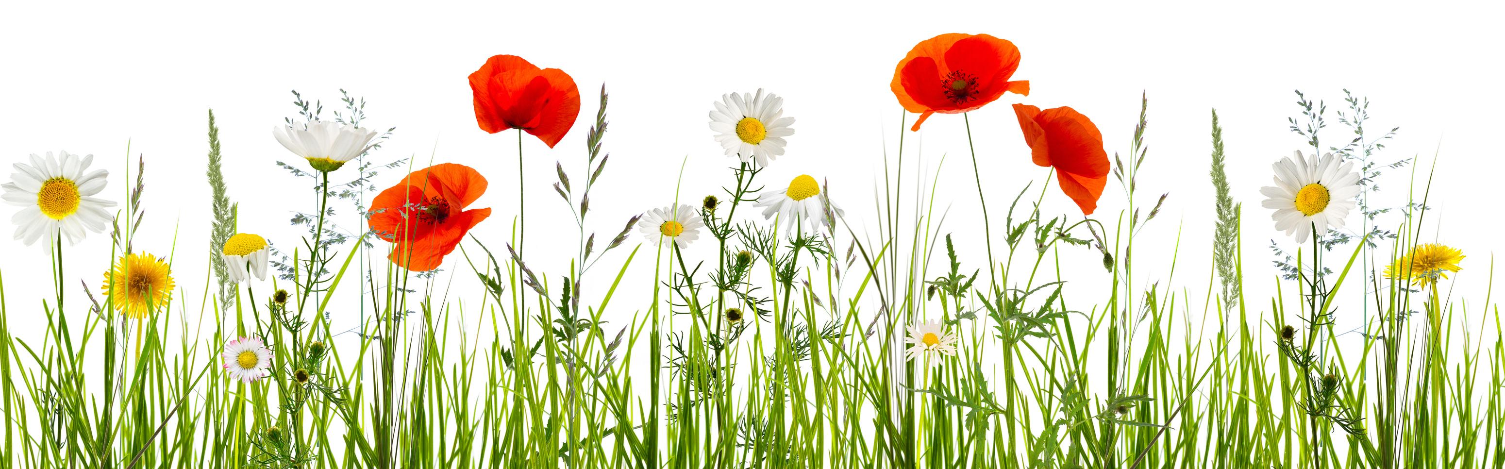 Bild av blommande sommaräng